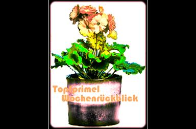 TopfPrimel-k