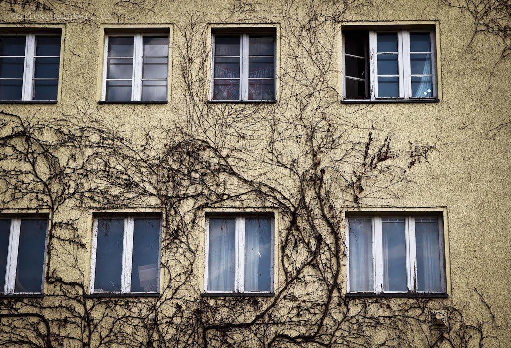 Häuserwand mit totem Efeu bewachsen