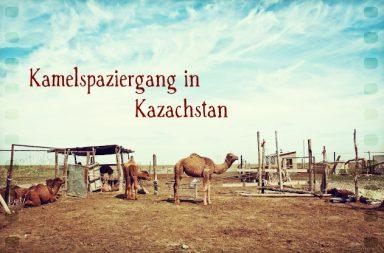 Kamelspaziergang in Kasachstan