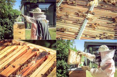 Imker mit Bienenstöcken