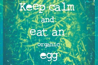 Keep calm and eat an egg.