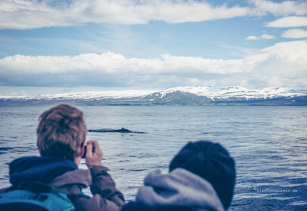 Whalewatching in Island
