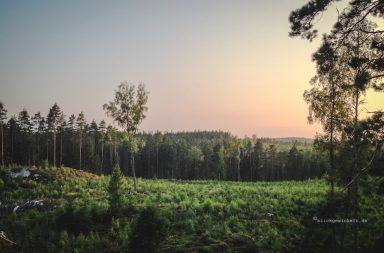 Smaland, Wald im Sonnenutnergang
