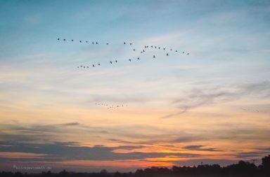 Darss-Sonnenuntergang