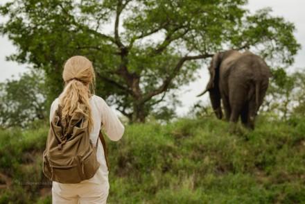 Elefant im Bush Afrikas