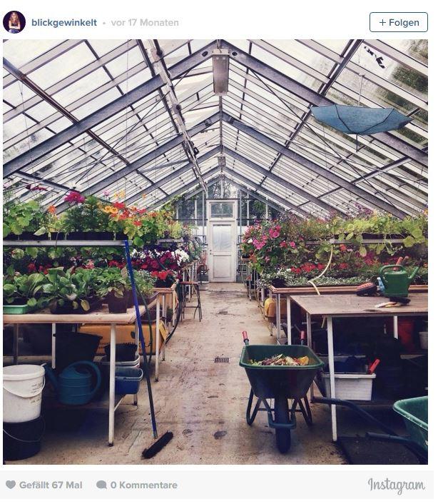 Der botanische Garten in Akureyri ist einer der nördlichsten der Welt. Gewächshaus mit Pflanzen.