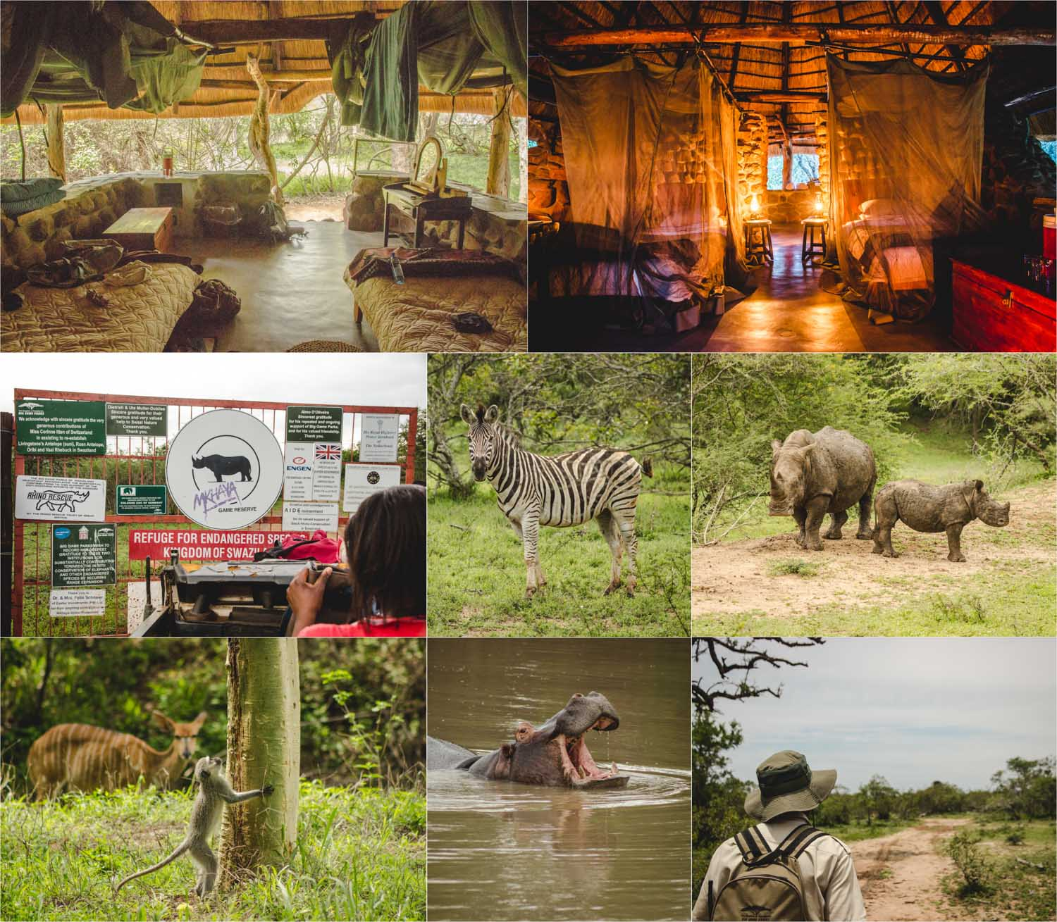 Mkhaya Game Reserve, Bildercollage: Auf Safari in Swaziland
