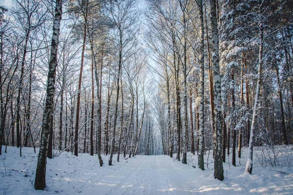 Winter in Berlin-Brandenburg