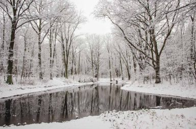 Waldsee im Schnee