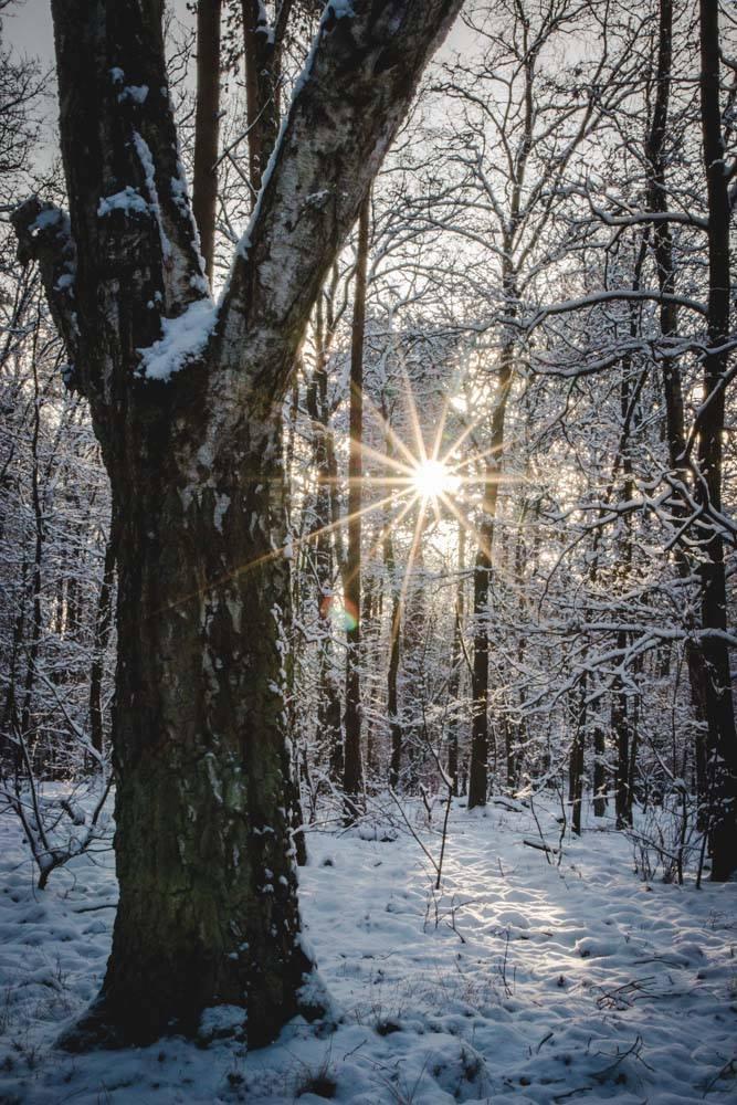 Sonnenstern im Winterwald