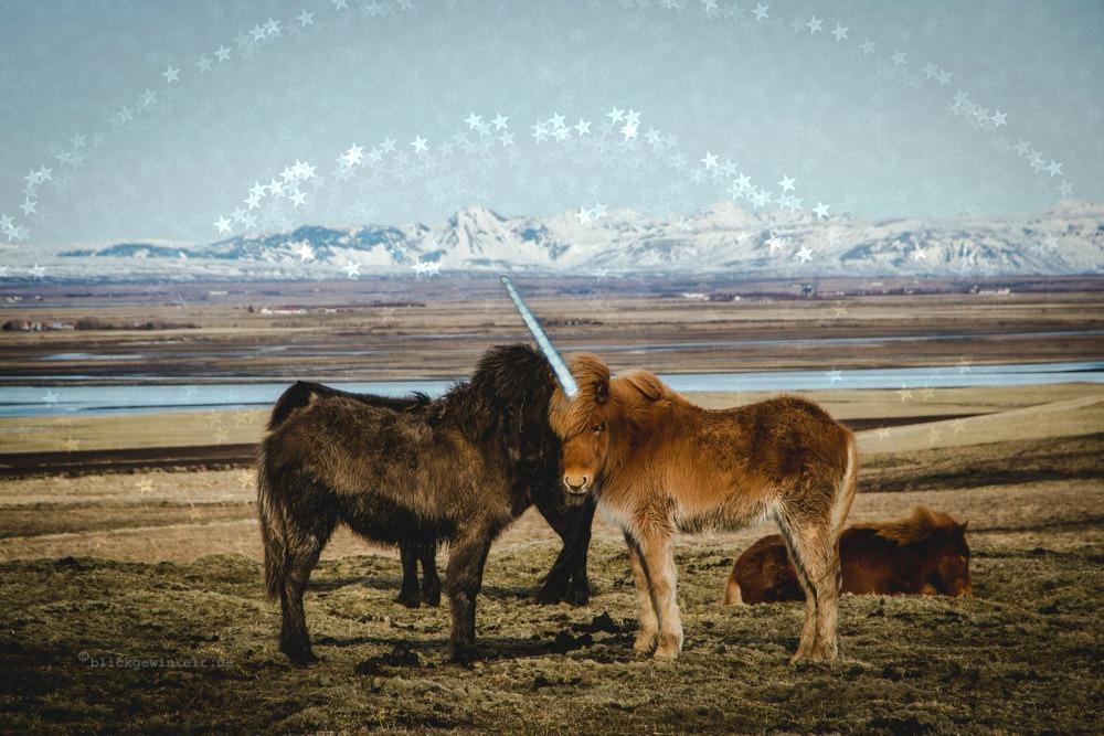 Das weltberühmte Island-Einhorn