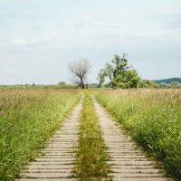 Zugewachsener Weg mit Betonplatten im Nationalpark Unteres ODertal