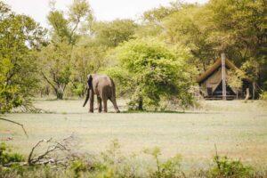 Südafrika: Elefant vor Zelt