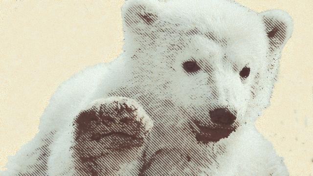 Der Südpolarbär - harhar