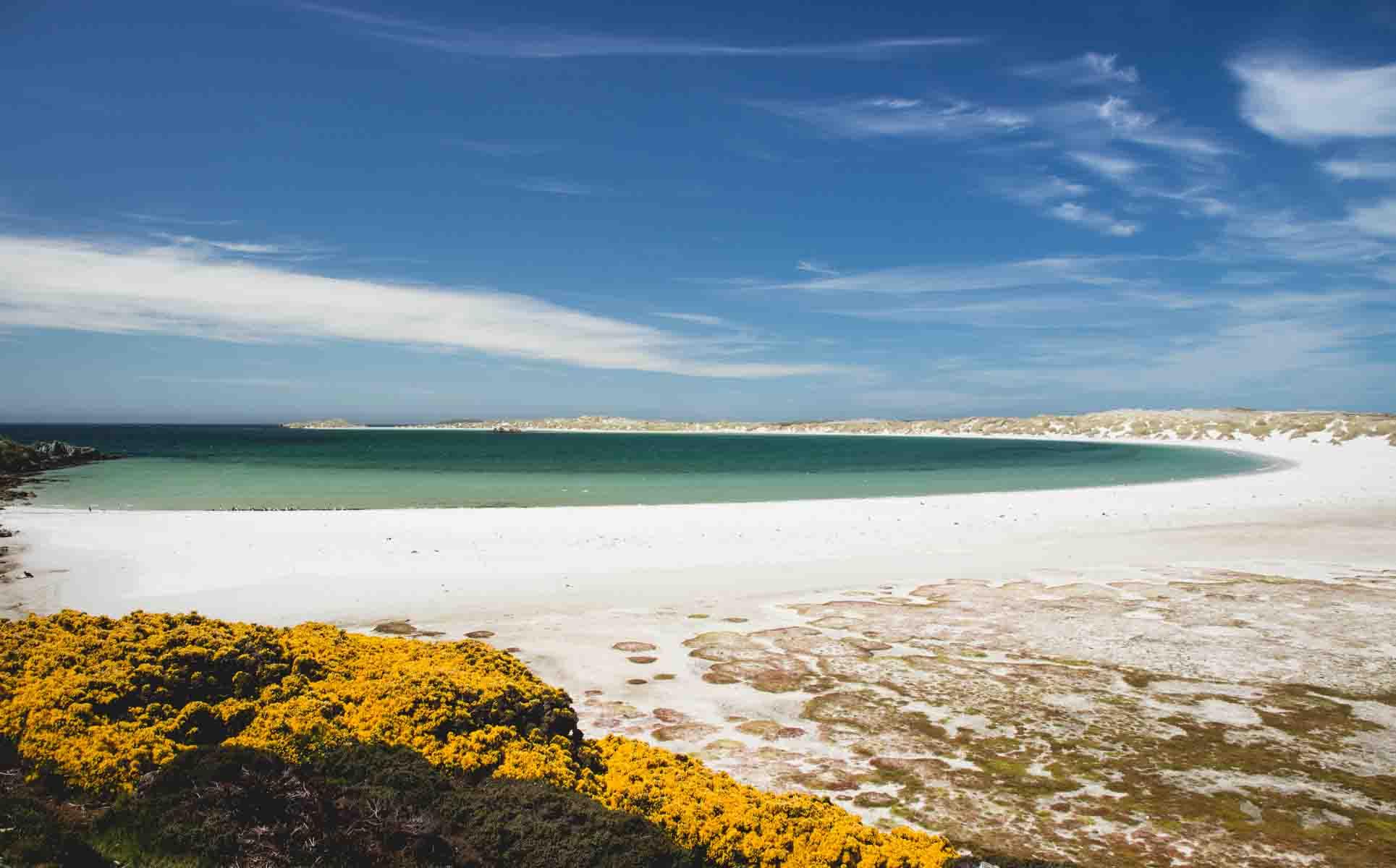 Grandiose Bucht: Gypsy Cove auf den Falklandinseln
