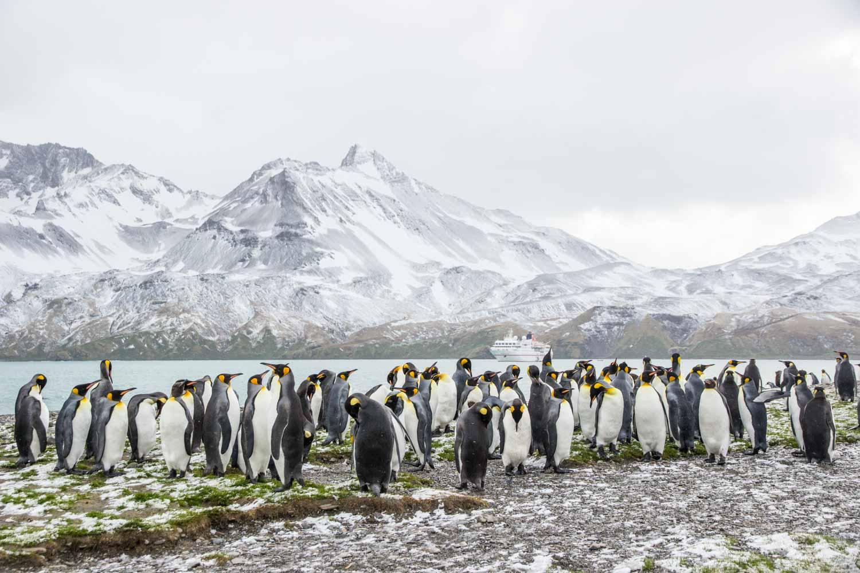 Naturparadies Südgeorgien in der Sub-Antarktis | blickgewinkelt
