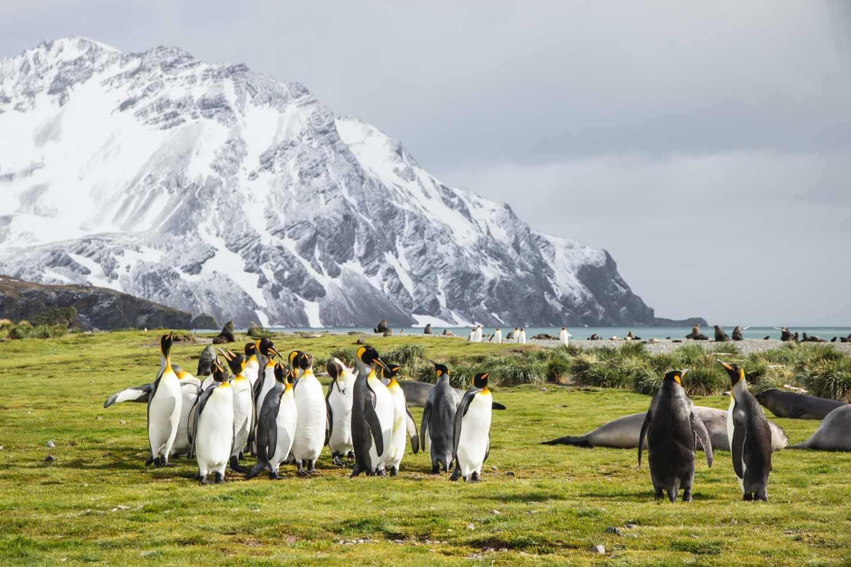 Naturparadies Südgeorgien: Berge, Seebären, Königspinguine, grüne Wiesen
