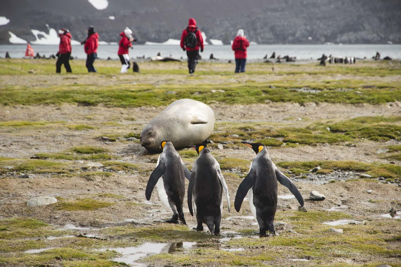 Pinguine und Menschen in der Natur