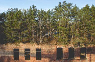 Verlassenes Haus mit Bäumen bewachsen