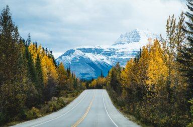 Auf dem ICefields Parkway in Kanada: Herbstliche Bäume zwischen riesigen Bergen