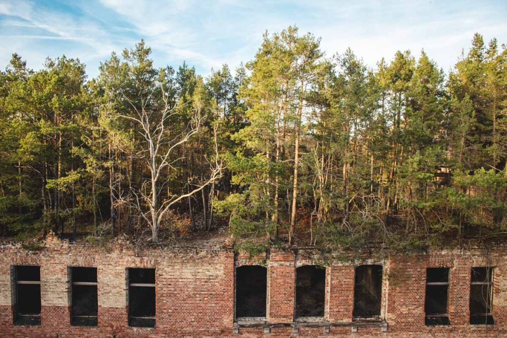 Dachwald auf einem verlassenen Haus