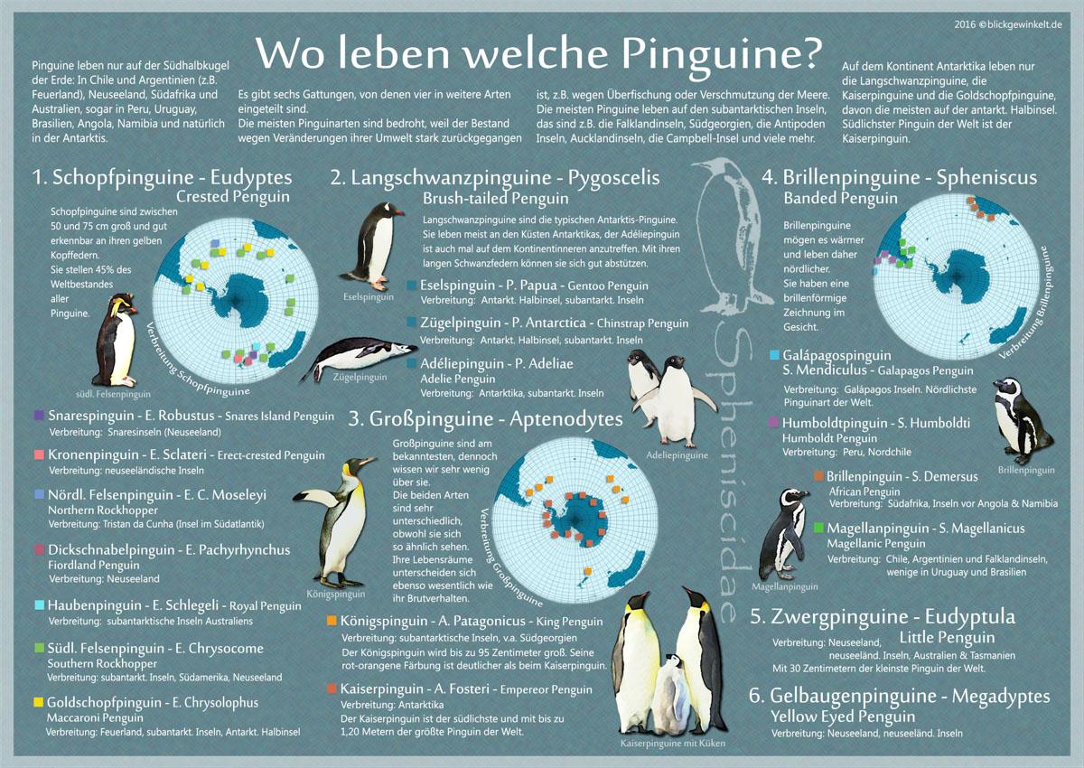 Pinguin-Karte: Wo leben Pinguine?