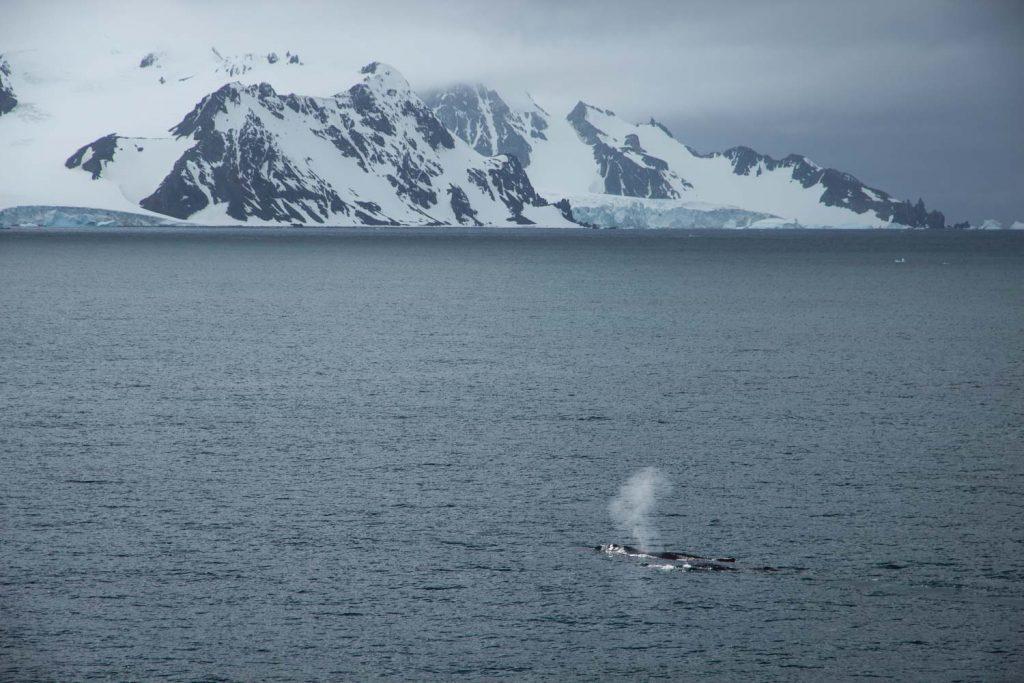 Wale in der Antarktis