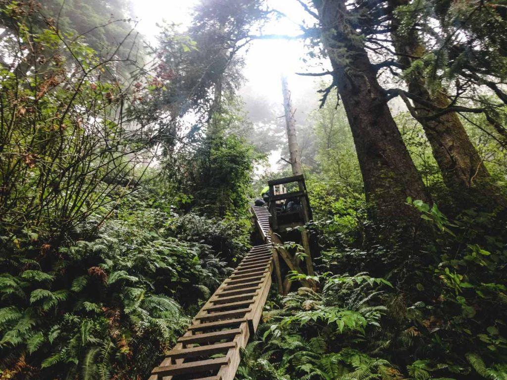 Leitern auf dem Wanderweg