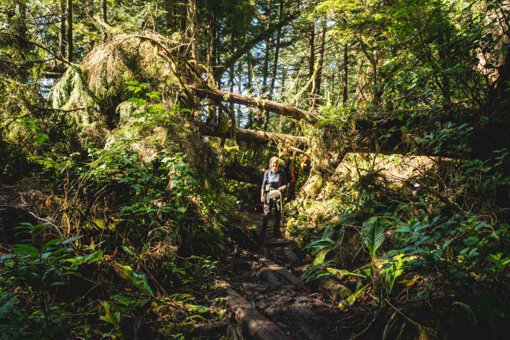 Urwald auf Vancouver Island, Kanada