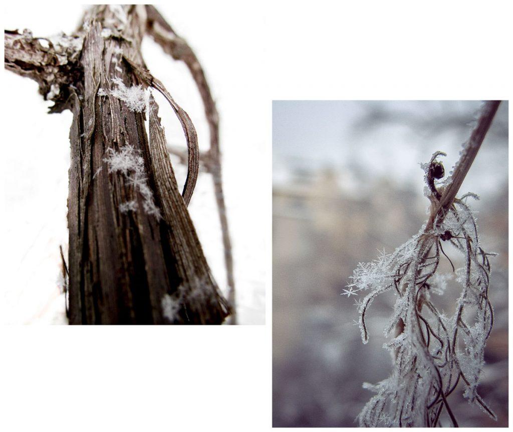 Schneekristalle auf Pflanzen im Garten