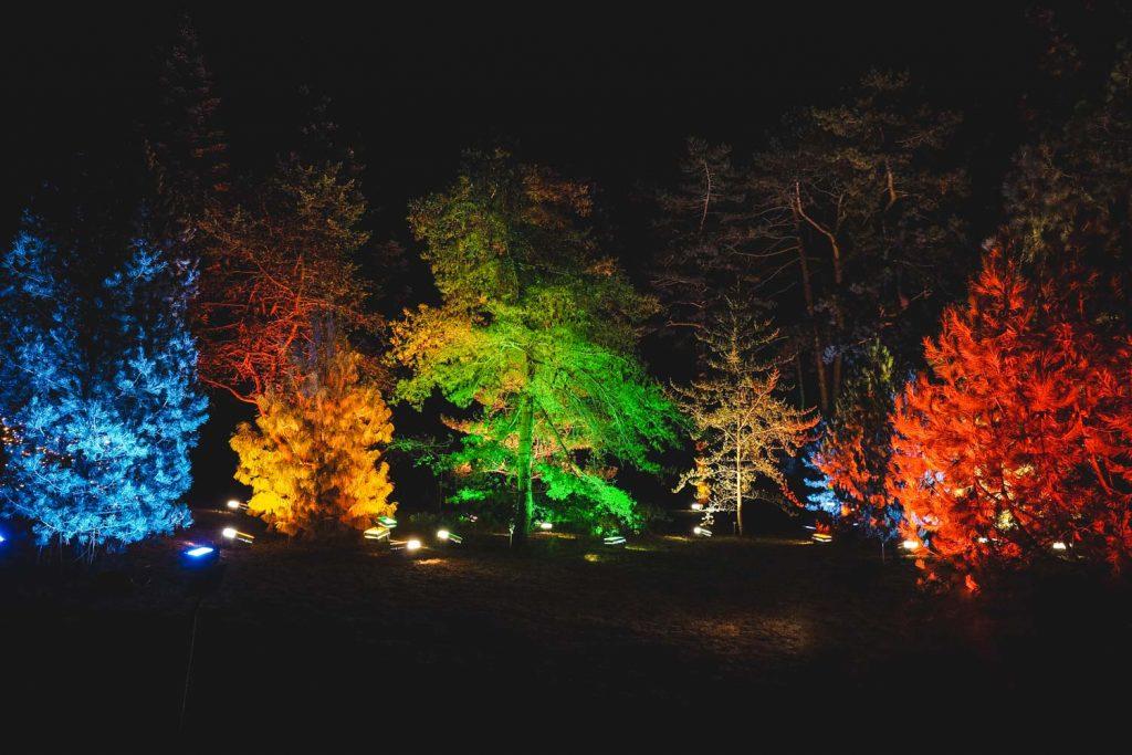 Bunt beleuchteter Wald