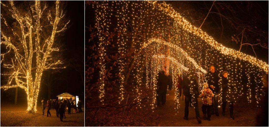 Tausend Lichterketten die von Bäumenhängen