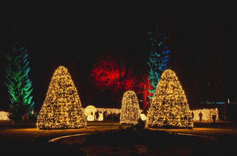 Christmas Garden Berlin: Tausende Lichtpunkte und geschmückte Bäume