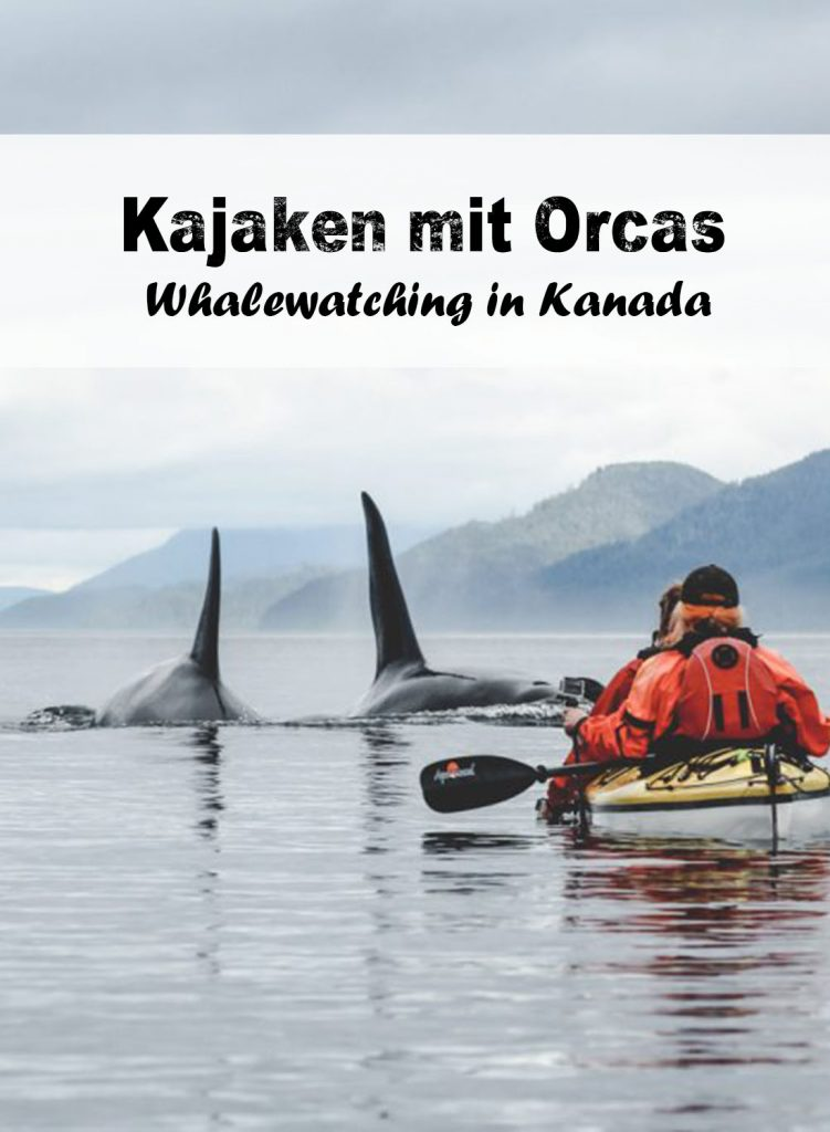 Kajaken mit Orcas - Whalewatching in Kanada