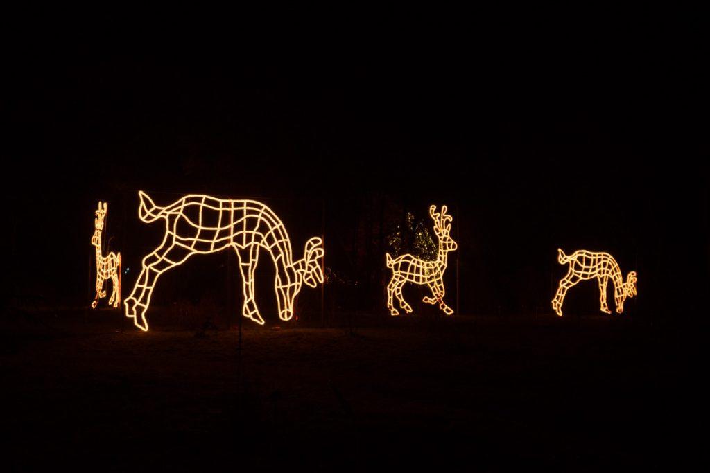 Rentiere aus Lichtern