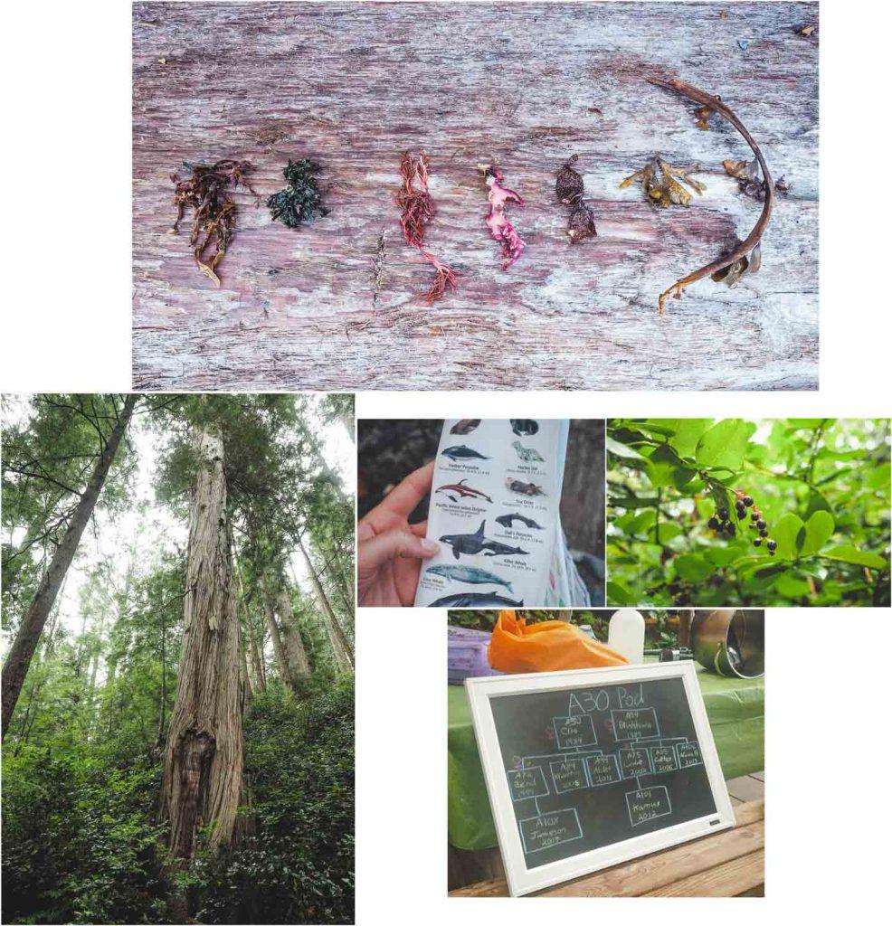Der Urwald, die Algen und ein Orca-Familienstammbaum
