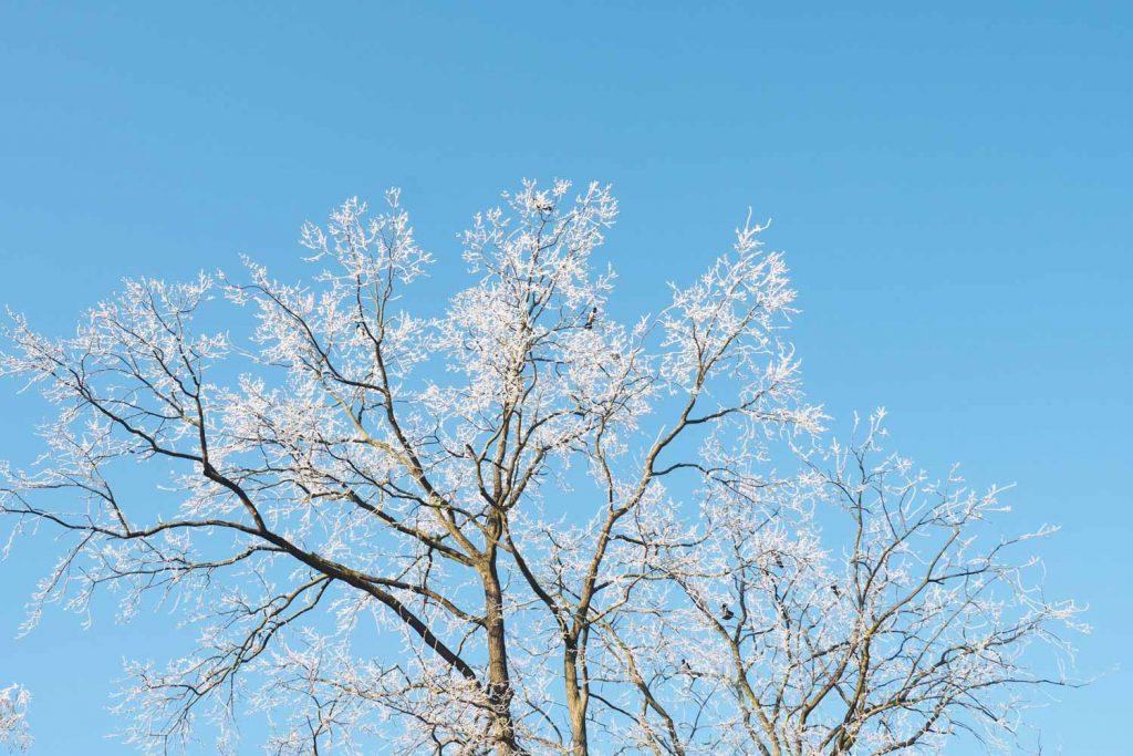 Frost auf Baumspitzen