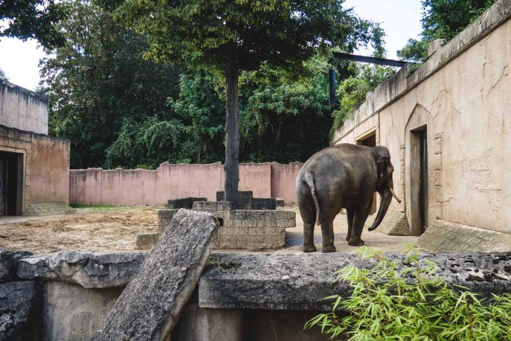 Elefant im kleinen Gehege