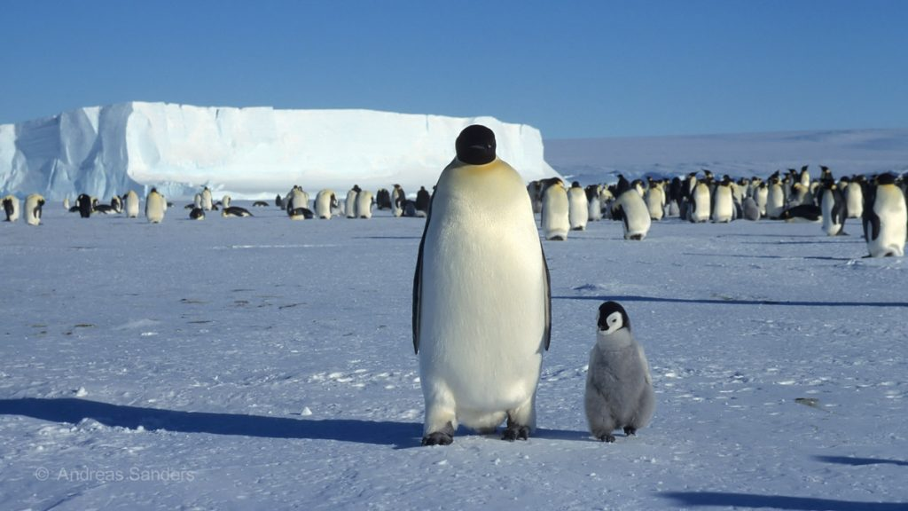 kaeltepol-antarktis-4