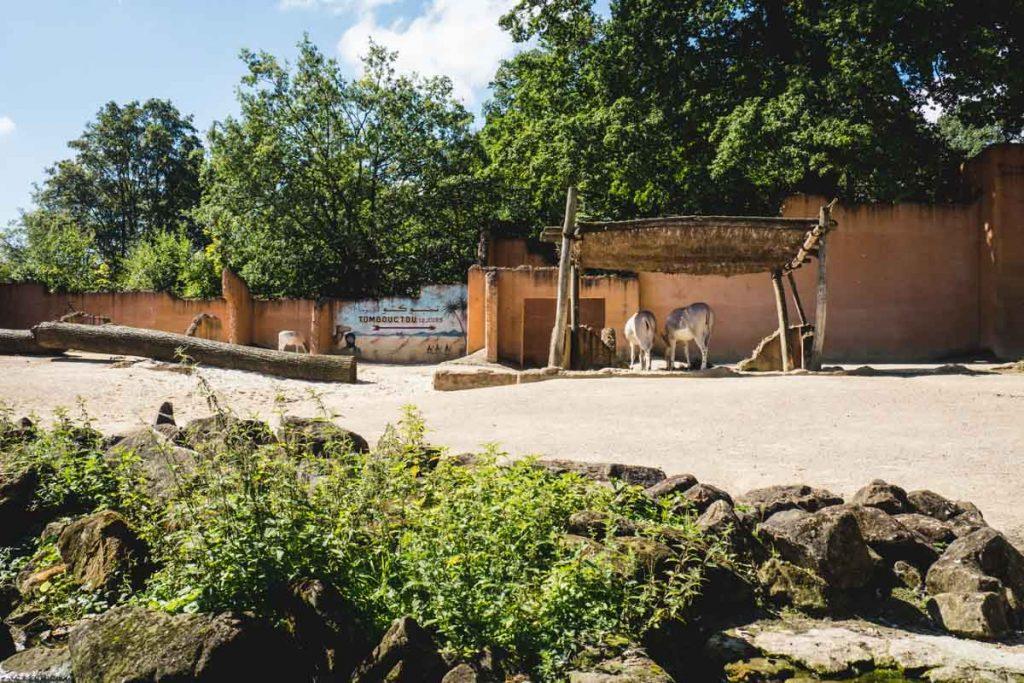 Afrika-Kulisse im Zoo
