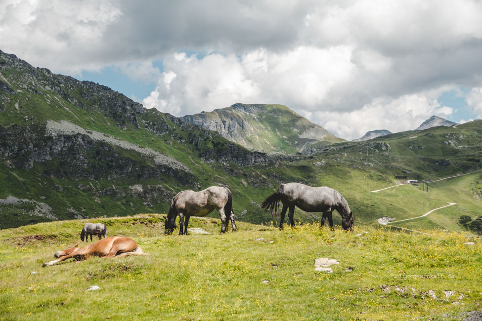 Pferde am Berg