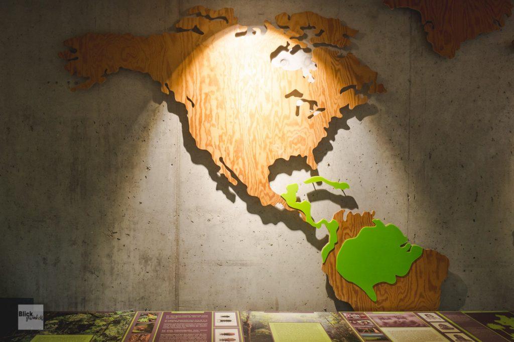 Weltkarte mit Regenwald