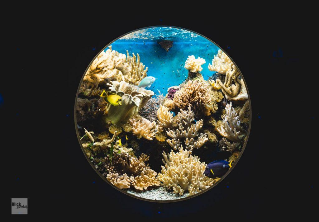 Unterwasserwelt Aquarium