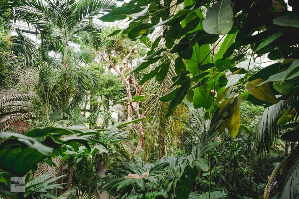 Dschungel grün