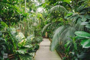 Wo der Pfeffer wächst: Ein Tag in der Tropenwelt der Biosphäre Potsdam