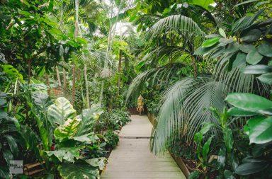 Bohlenweg durch Tropenwald