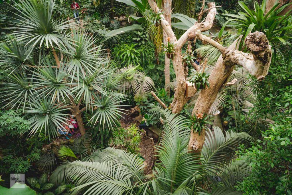 Blick von oben auf den Regenwald