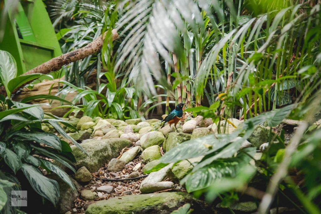 Tropischer Vogel unter Palmen