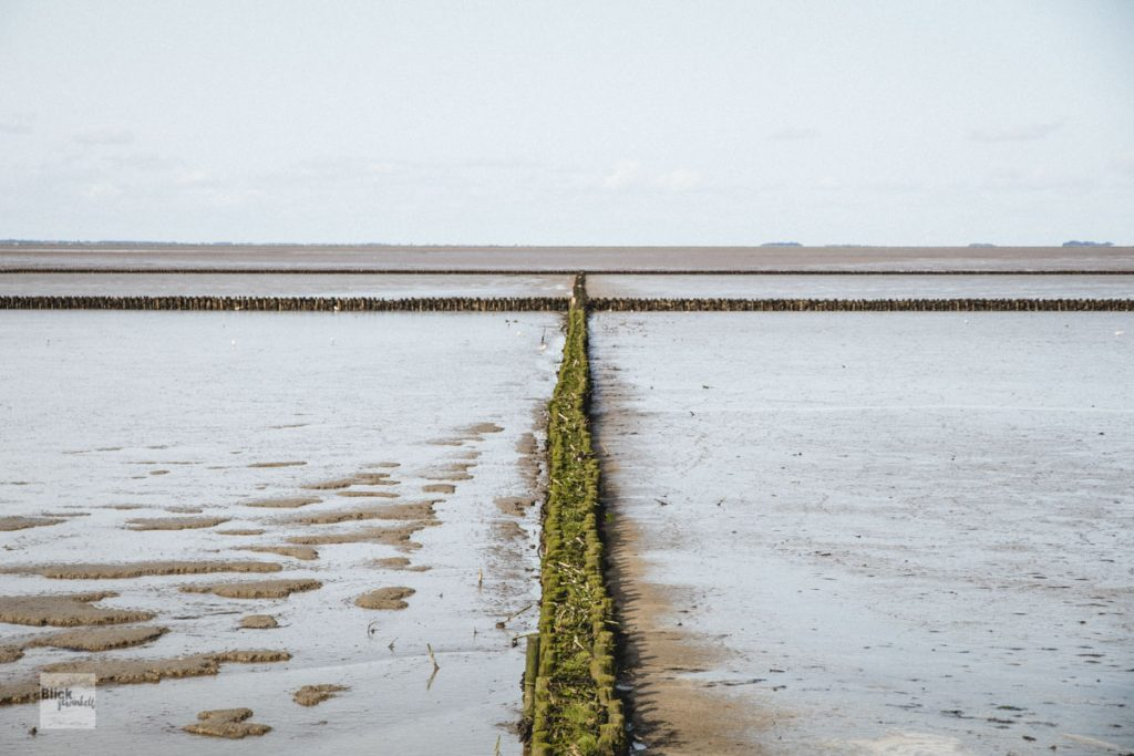 Buhnen im Wattenmeer
