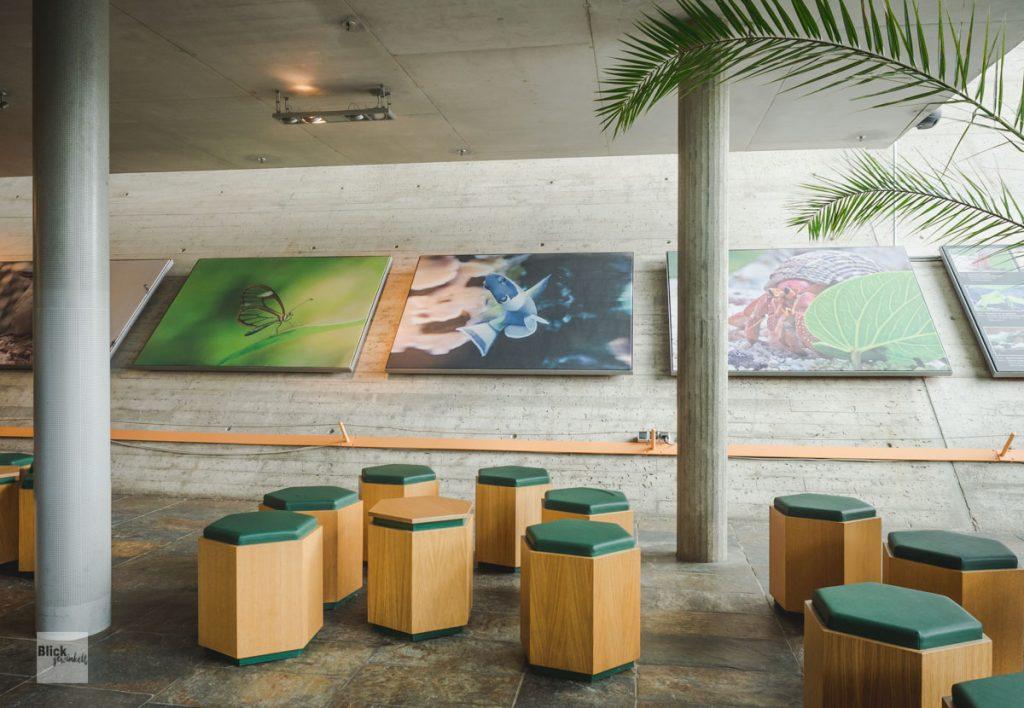 Hocker und große Bilder im Eingangsbereich der Biosphäre Potsdam
